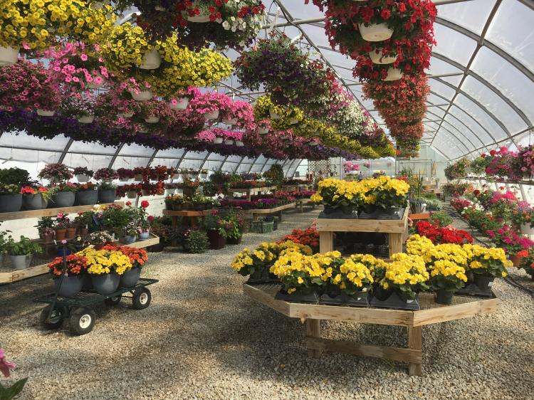 Get your Flowers at Elzinga Farm and Greenhouse
