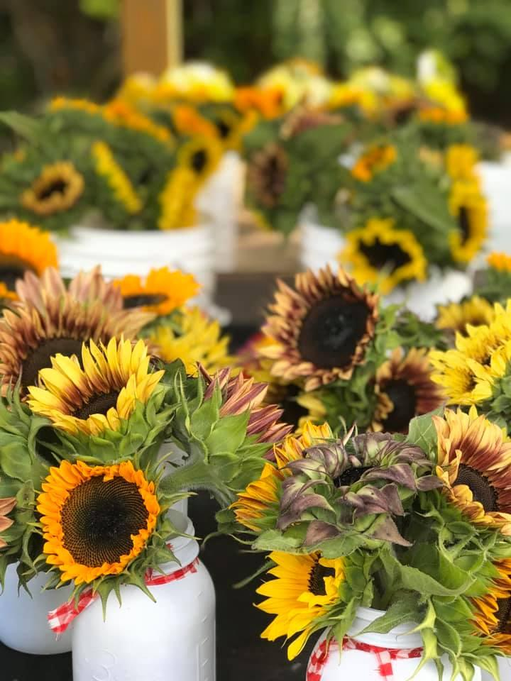 Pick out Sunflowers at Happy Harvest Sunflowers
