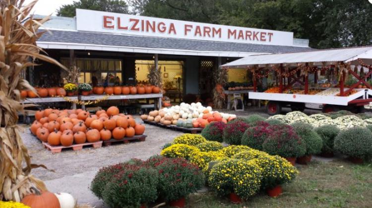 Fall Festival at Elzinga Farm & Greenhouse