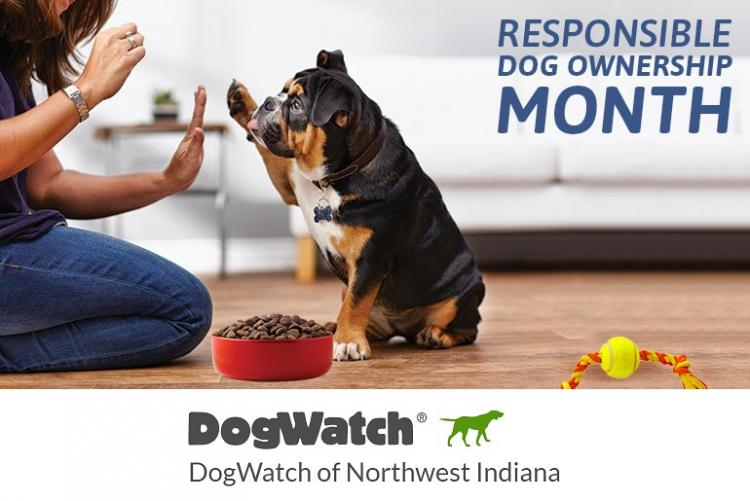 10 Tips to Follow to be a Responsible Dog Owner