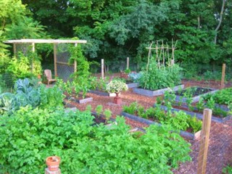 Raised Bed Gardening with Sue Lavallee of Coast of Maine Products