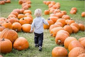Hayrides and Pumpkin Patch