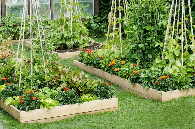 All About Raised-Bed Gardens